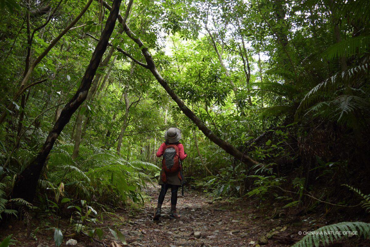 木漏れ日の森林の小道を歩くガイドの女性