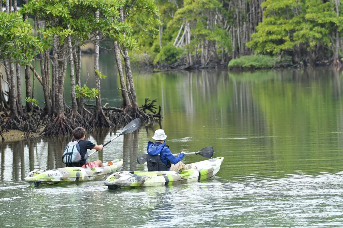 マングローブ林でカヌーを漕ぐ二人の後ろ姿